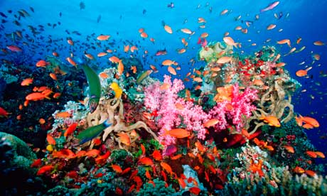 Coral-reef-near-Fiji-007
