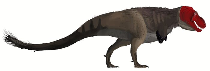 Is-this-was-the-tyrannosaurs-rex-really-looked-like