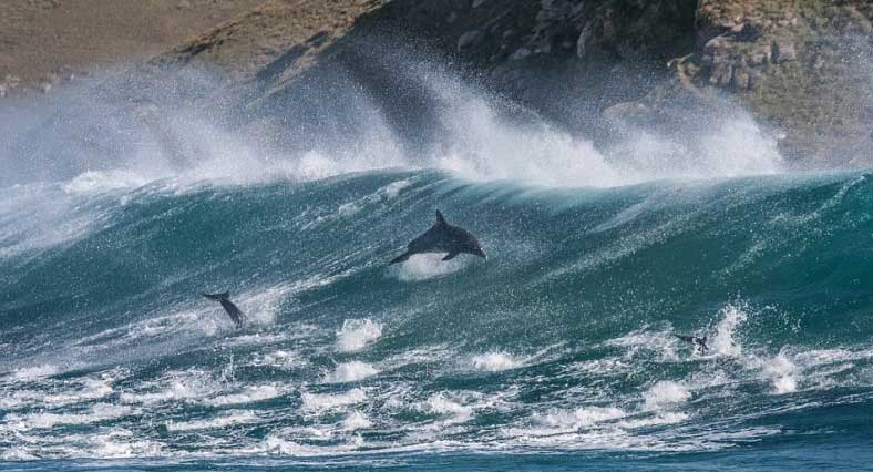 Dolphins-riding-wave3 (1)