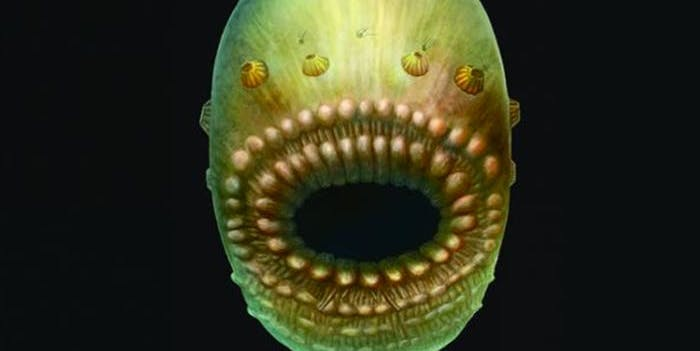 Hello-papa-the-saccorhytus-coronarius-is-an-ancient-ancestor-of-humans