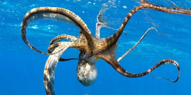 How-many-tickles-does-it-take-to-make-an-octopus-laugh-ten-tickles