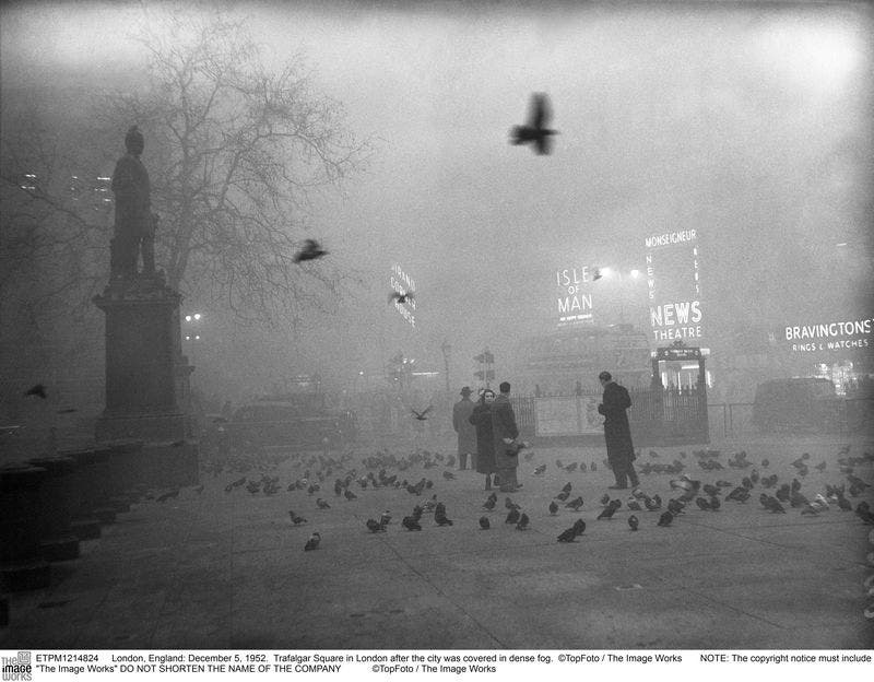 Birds_in_Trafalgar_Square__TopFoto_The_Image_Works