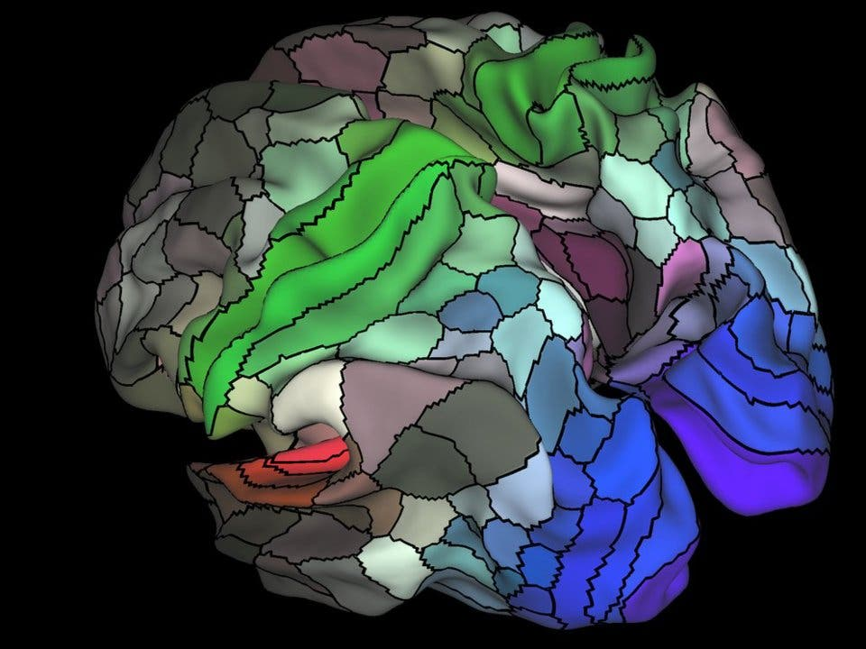 Map of Human Brain