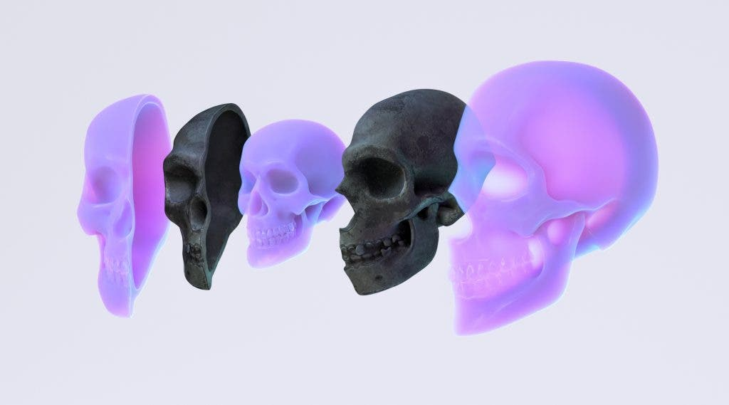 Early Man Skulls